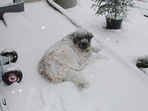 V-snegu