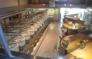 proizvodstvo-sira