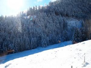 shweicaria-zimoy