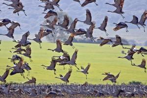 migration-v-globalnom-mastabe