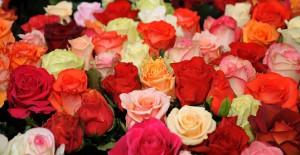 buket roz