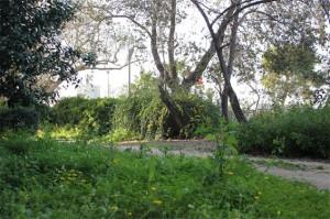 zelen-lesa