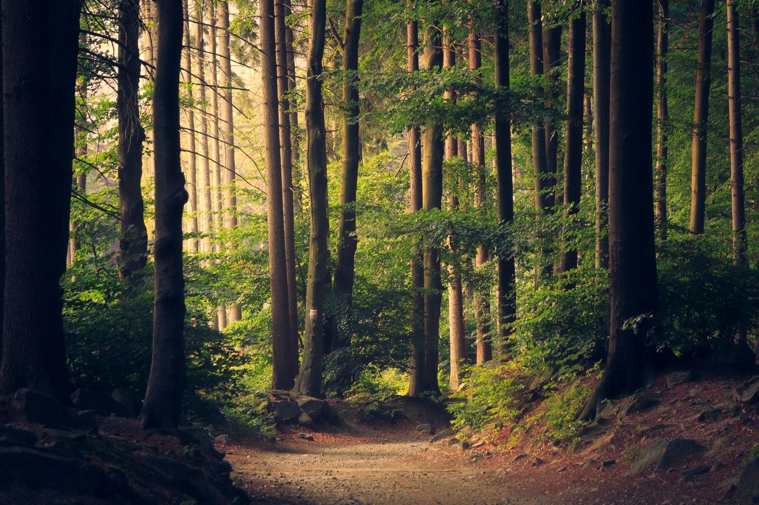 Живительная сила леса