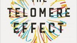 Эффект теломеров